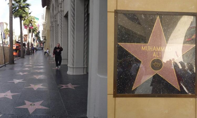 hollywood walk of fame new