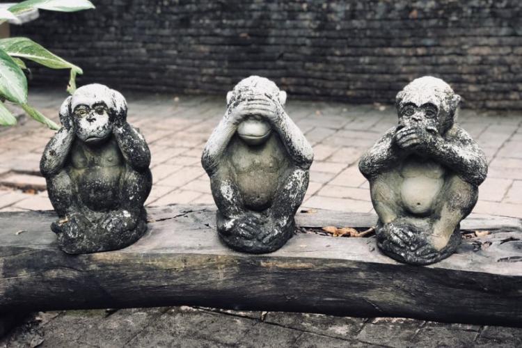 Videozapis majmuna