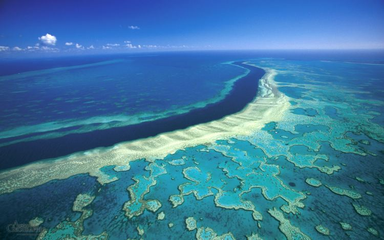 great barrier reef hardy