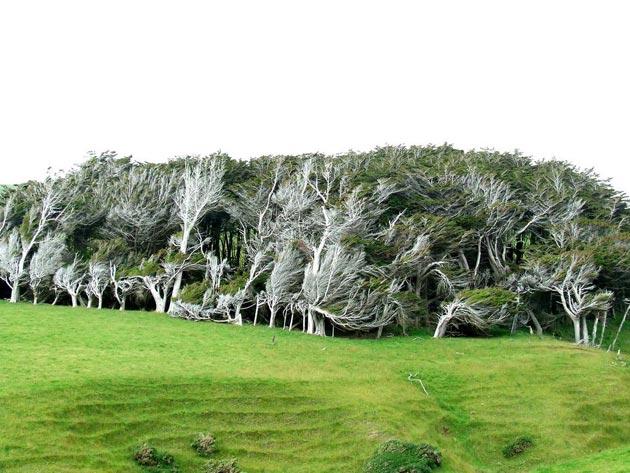 drvece 3