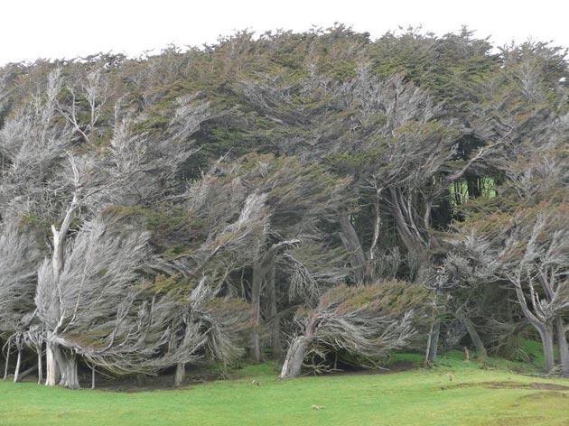 drvece 5