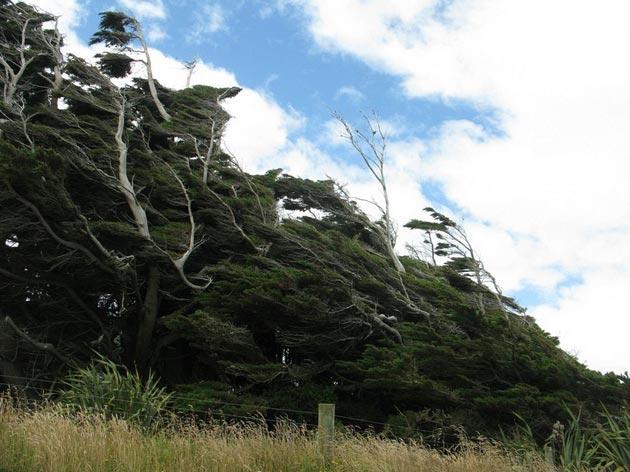 drvece 6
