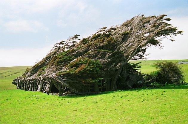 drvece 7
