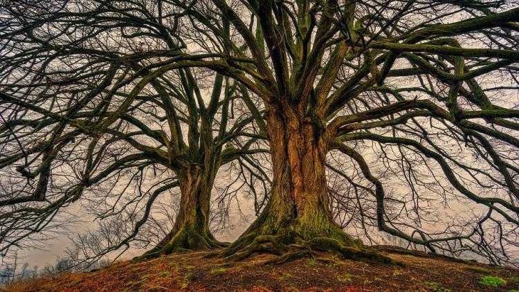 PODZEMNA 'DRUŠTVENA MREŽA': Kako drveće 'razgovara'?